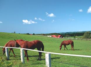 牧場写真2